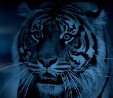Intel Confirms Launch Window For Next-Gen 10nm  Tiger Lake Processors